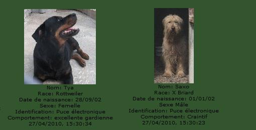 -de 6 mois pour sauver 50 chiens de plus de 5 ans (26) C2101010