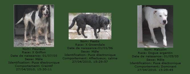 -de 6 mois pour sauver 50 chiens de plus de 5 ans (26) C3101010