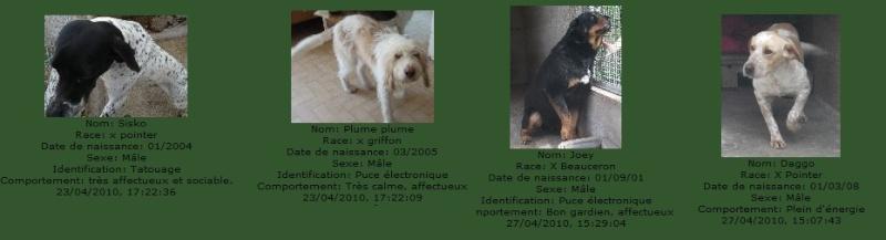-de 6 mois pour sauver 50 chiens de plus de 5 ans (26) C3111010