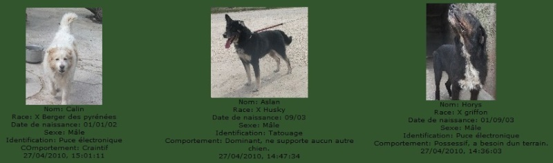 -de 6 mois pour sauver 50 chiens de plus de 5 ans (26) C5101010