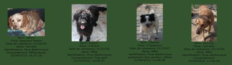 -de 6 mois pour sauver 50 chiens de plus de 5 ans (26) C6101010