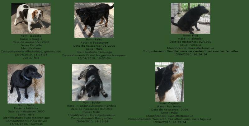 -de 6 mois pour sauver 50 chiens de plus de 5 ans (26) C7101010