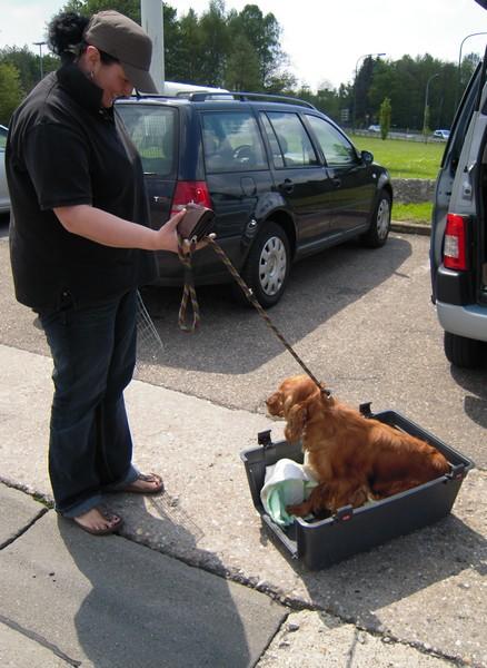 Covoiturage de 6 chiens (15 mai 2010) Cocker13