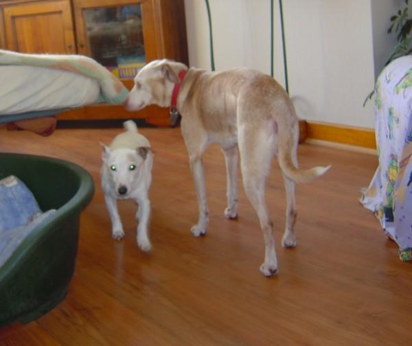 DIANE est à la maison (24 mars 2010) Diane-12