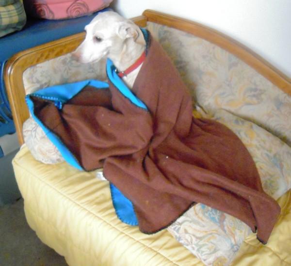 L'aurait peut-être bien du Whippet (5 avril 2010) Diane-28