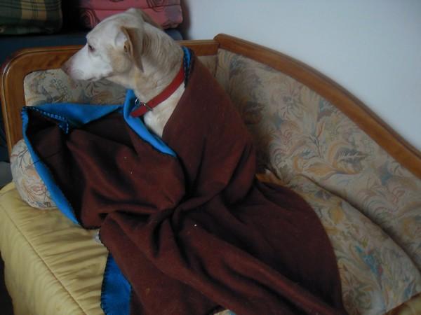 L'aurait peut-être bien du Whippet (5 avril 2010) Diane-29