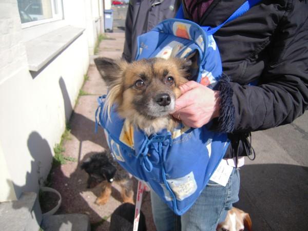 Promenade (1er avril 2010) Fanett11