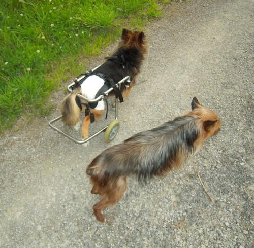 Promenade en liberté (13 juin 2010) Fanett68