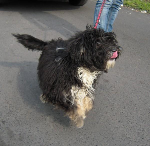 Covoiturage de 6 chiens (15 mai 2010) Fiona-10