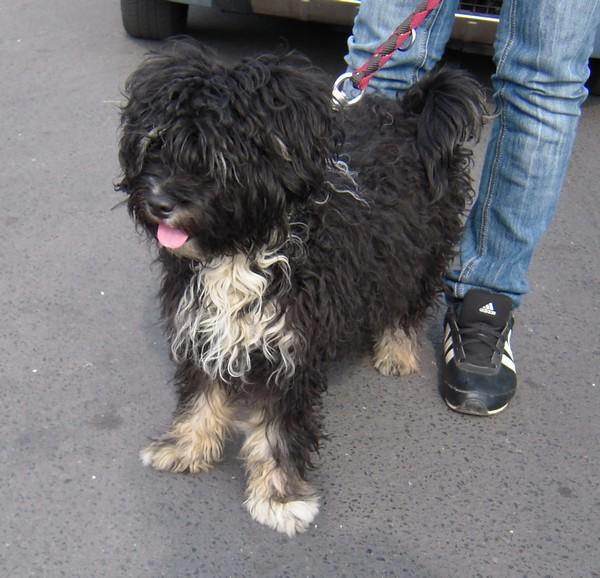 Covoiturage de 6 chiens (15 mai 2010) Fiona-11