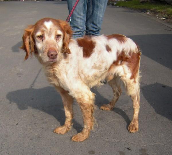 Covoiturage de 6 chiens (15 mai 2010) Max-310