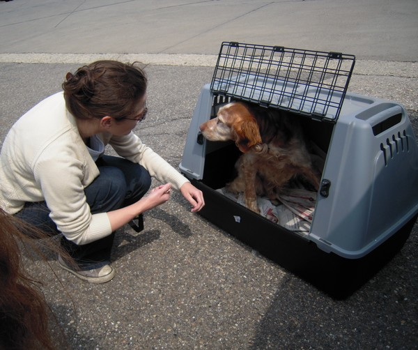 Covoiturage de 6 chiens (15 mai 2010) Max-ar10