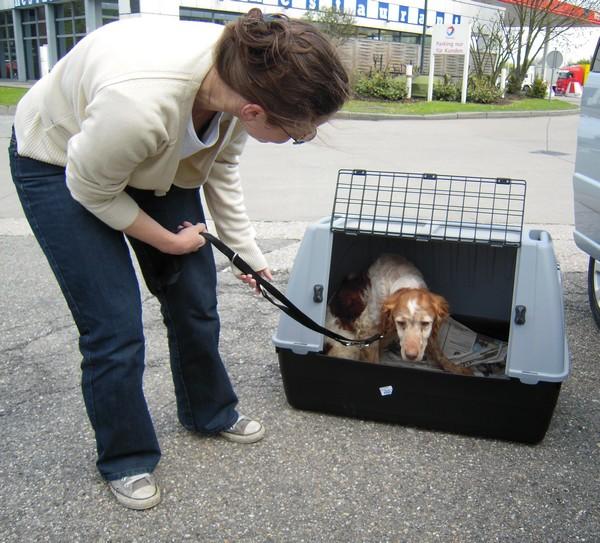 Covoiturage de 6 chiens (15 mai 2010) Max-ar11