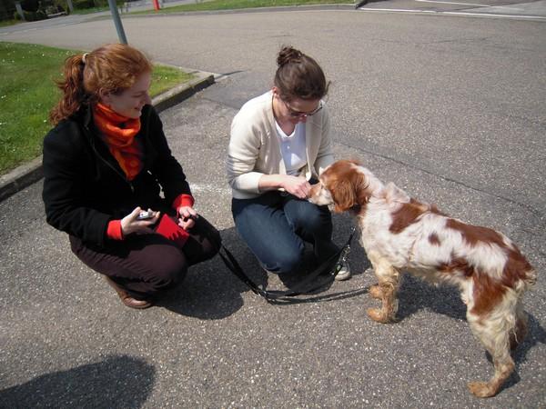 Covoiturage de 6 chiens (15 mai 2010) Max-ar12