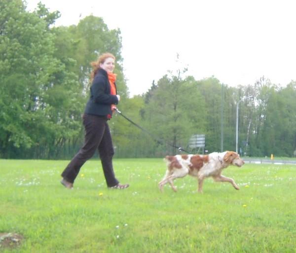 Covoiturage de 6 chiens (15 mai 2010) Max-ar15