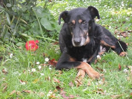 MAX détendu (27 juin 2010) Max-he12