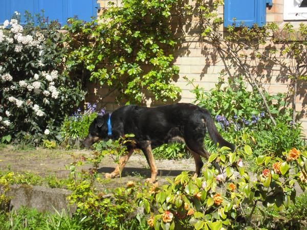 Promenade au jardin (21 avril 2010) Max-ja10