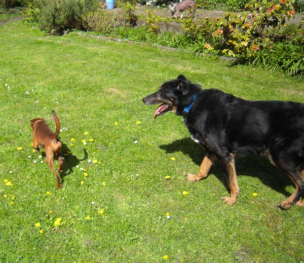 Promenade au jardin (21 avril 2010) Max-ja12