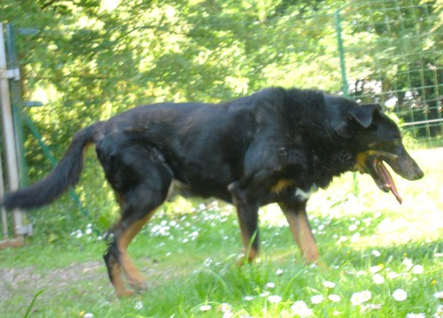 Promenade au jardin (23 juin 2010) Max-ja16
