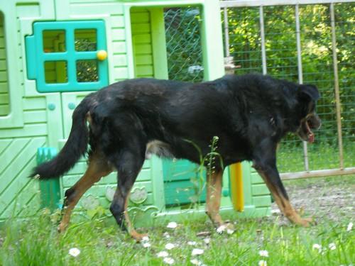 Promenade au jardin (23 juin 2010) Max-ja17