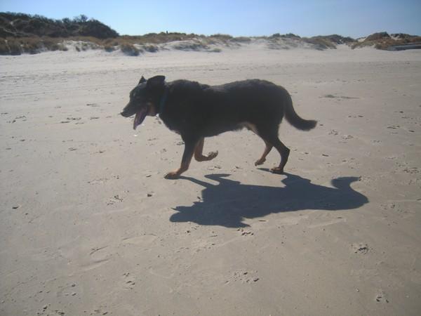 Promenade à la plage (6 avril 2010) Max-pl10