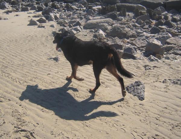 Promenade à la plage (6 avril 2010) Max-pl13