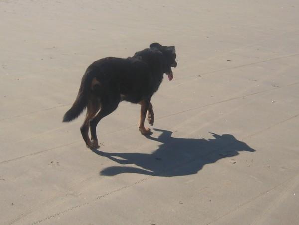 Promenade à la plage (6 avril 2010) Max-pl14