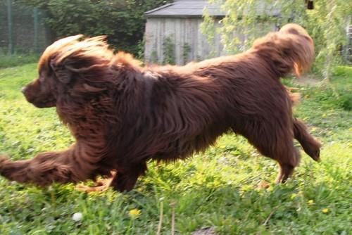 Covoiturage de 4 chiens (24 avril 2010) Nougat10