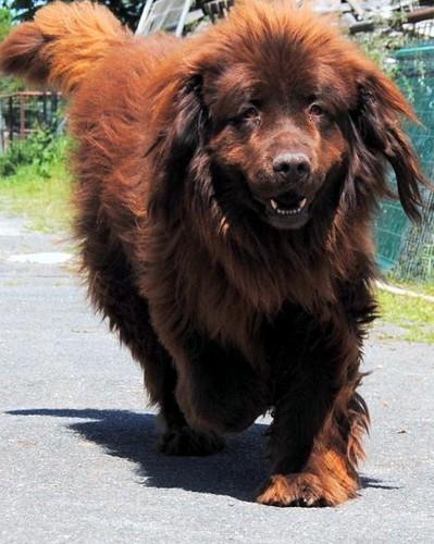 Covoiturage de 4 chiens (24 avril 2010) Nougat13