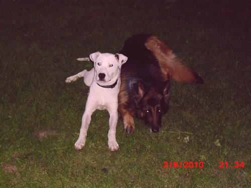 Covoiturage de 4 chiens (28 mai 2010) - Page 2 Sam112