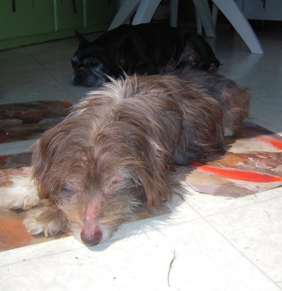 Journée au soleil (6 juin 2010) Titus102