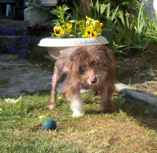 Journée au soleil (6 juin 2010) Titus115