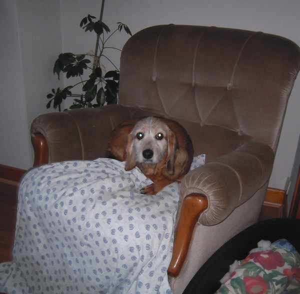 TOBBY et le confort (19 avril 2010) Tobby-13