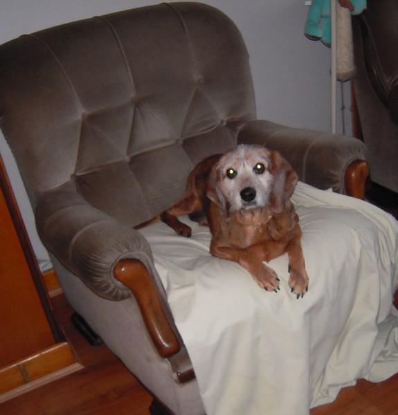 TOBBY et le confort (19 avril 2010) Tobby-14