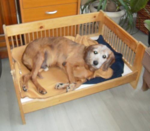 TOBBY et le confort (19 avril 2010) Tobby-16