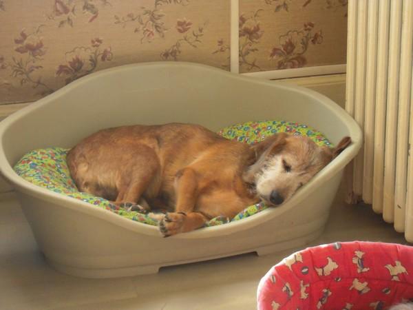 TOBBY et le confort (19 avril 2010) Tobby-17
