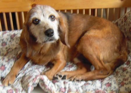 Santé (8 mai 2010) Tobby-22