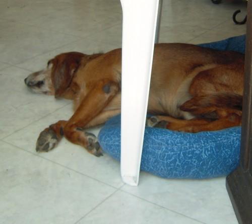 Journée chez Mamie (4 juin 2010) Tobby-40