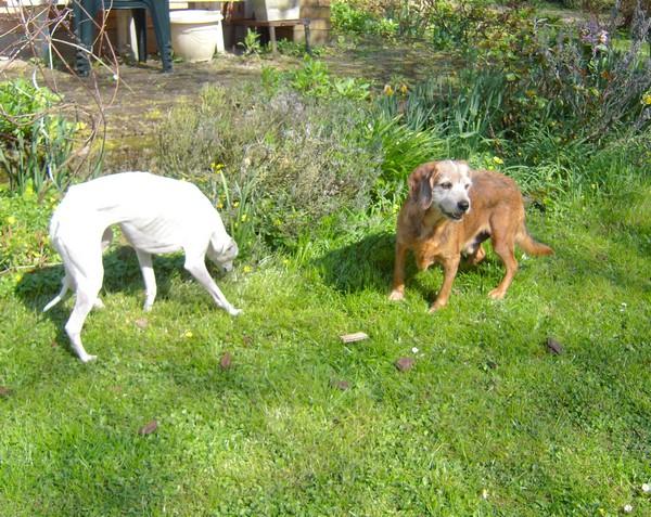 Promenade au jardin (17 avril 2010) Toby-j14