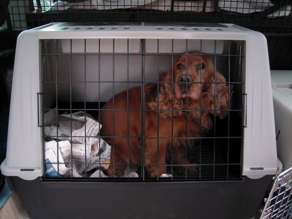 Covoiturage de 6 chiens (15 mai 2010) Unic-210