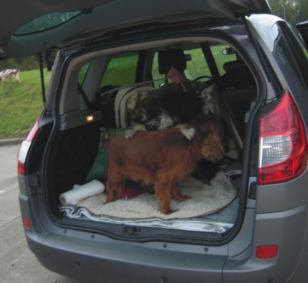 Covoiturage de 6 chiens (15 mai 2010) Unic-d10