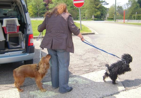 Covoiturage de 6 chiens (15 mai 2010) Unic-f10