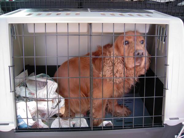 Covoiturage de 6 chiens (15 mai 2010) Unic10