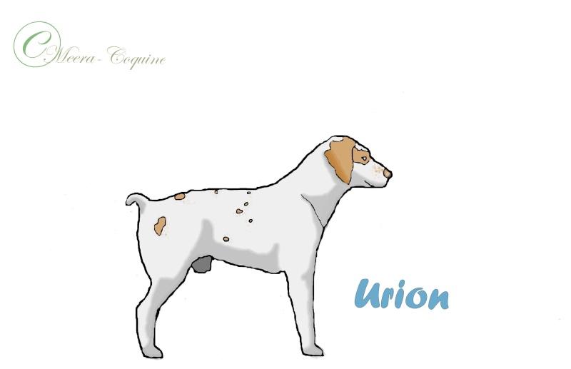 Urion ( colo ) - Page 2 Urion_10