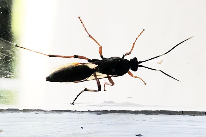 C'est quoi cet insecte? Img_4410