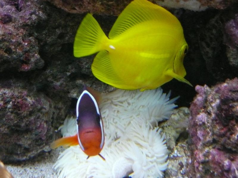 Fish ID P1000512