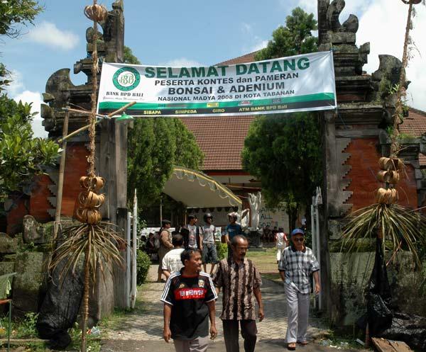 Bonsai exhibition in Tabanan, Bali _2310