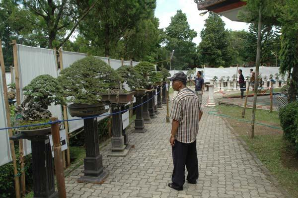 Bonsai exhibition in Tabanan, Bali _2410