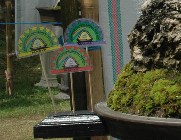 Bonsai exhibition in Tabanan, Bali Auszei10