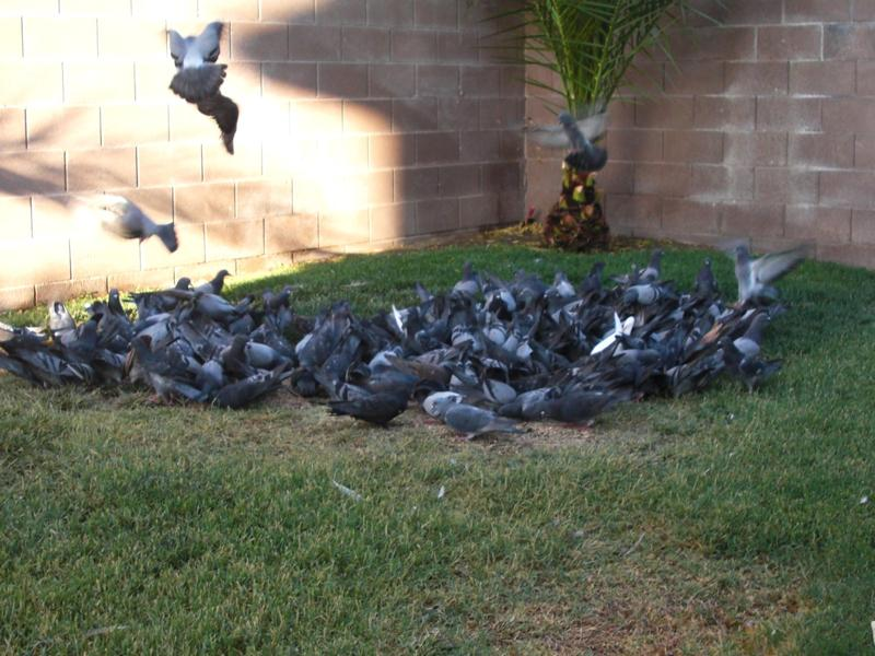 TAKING INDOOR BIRDS OUTSIDE 007lou10